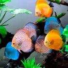Alimento peces